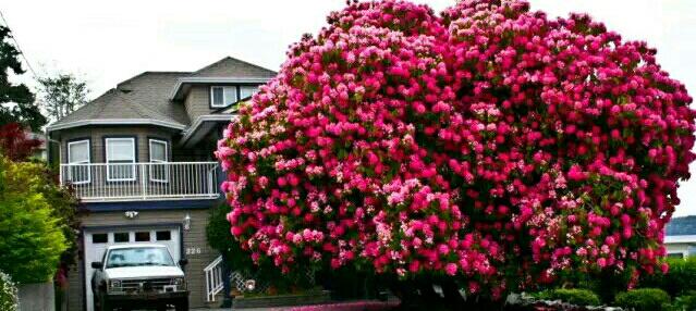 全球最美的树 最后一棵惊艳了千年