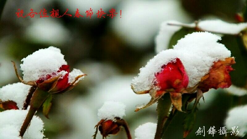 恭賀新禧! 祝親人們丁酉雞年春節快樂!