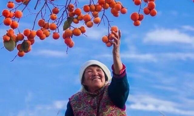 霜降之时 柿柿如意
