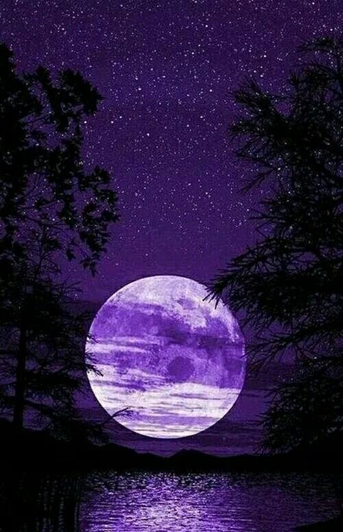 月 亮 赋最美的月亮送给.