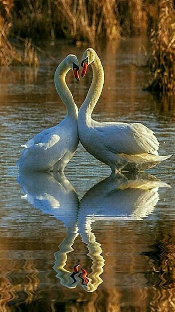 壁纸 动物 鸟 鸟类 564_1004 竖版 竖屏 手机