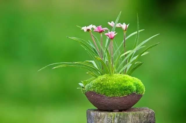 一花一世界, 一草一天堂。