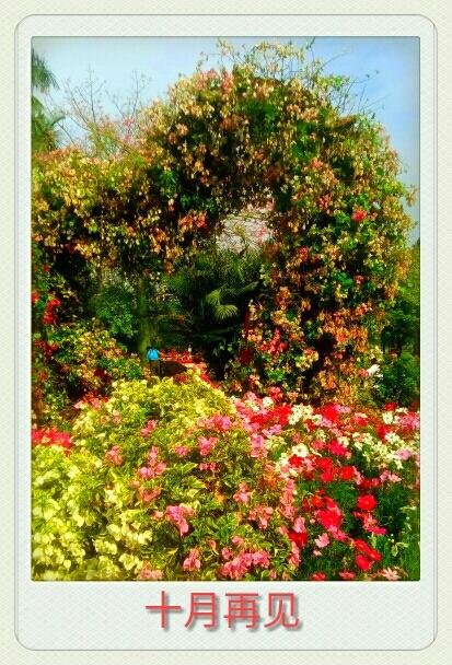 十二月庭院花卉一冬季如春 花开四季丨常年不断