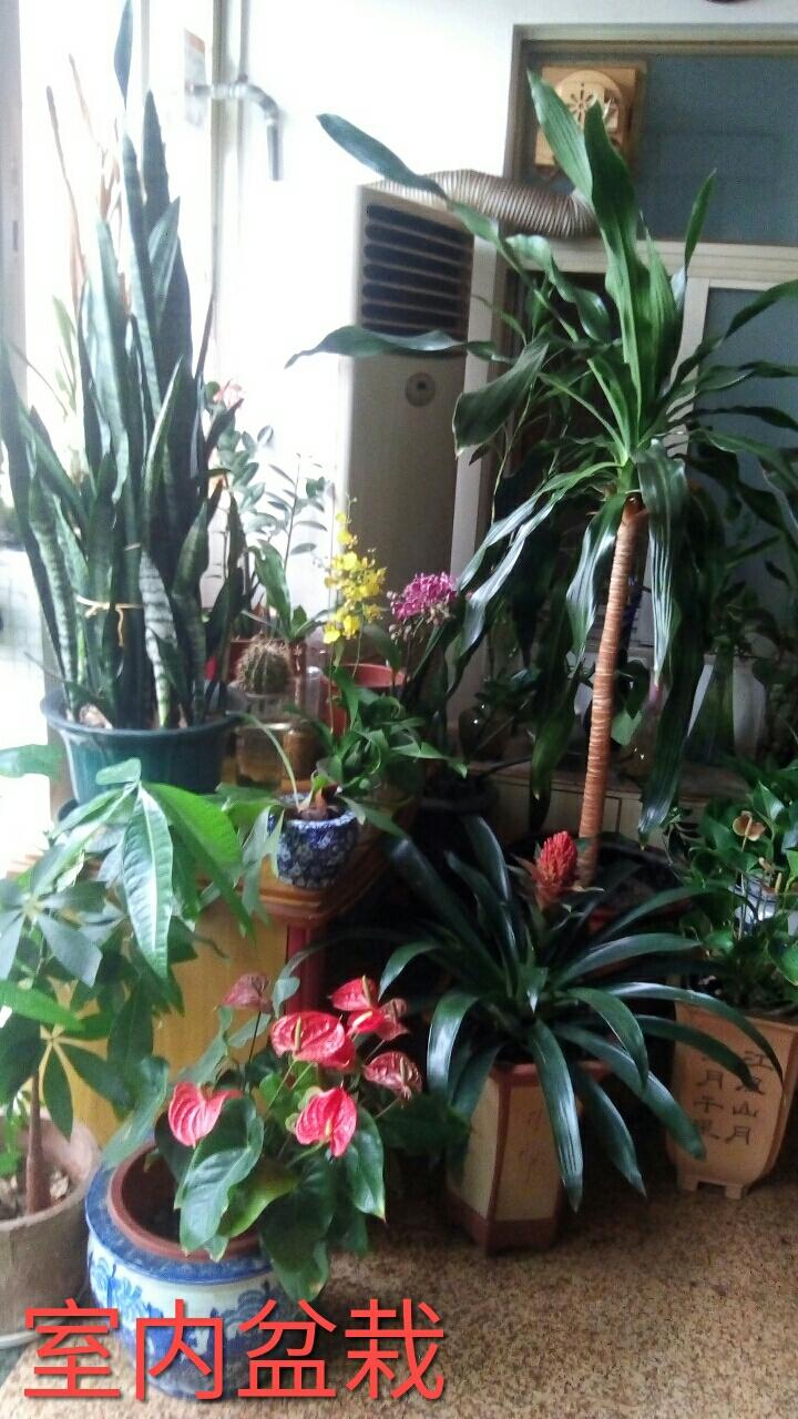自然生命形式一室内盆栽