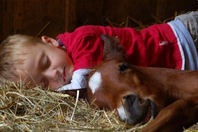 娃娃与动物