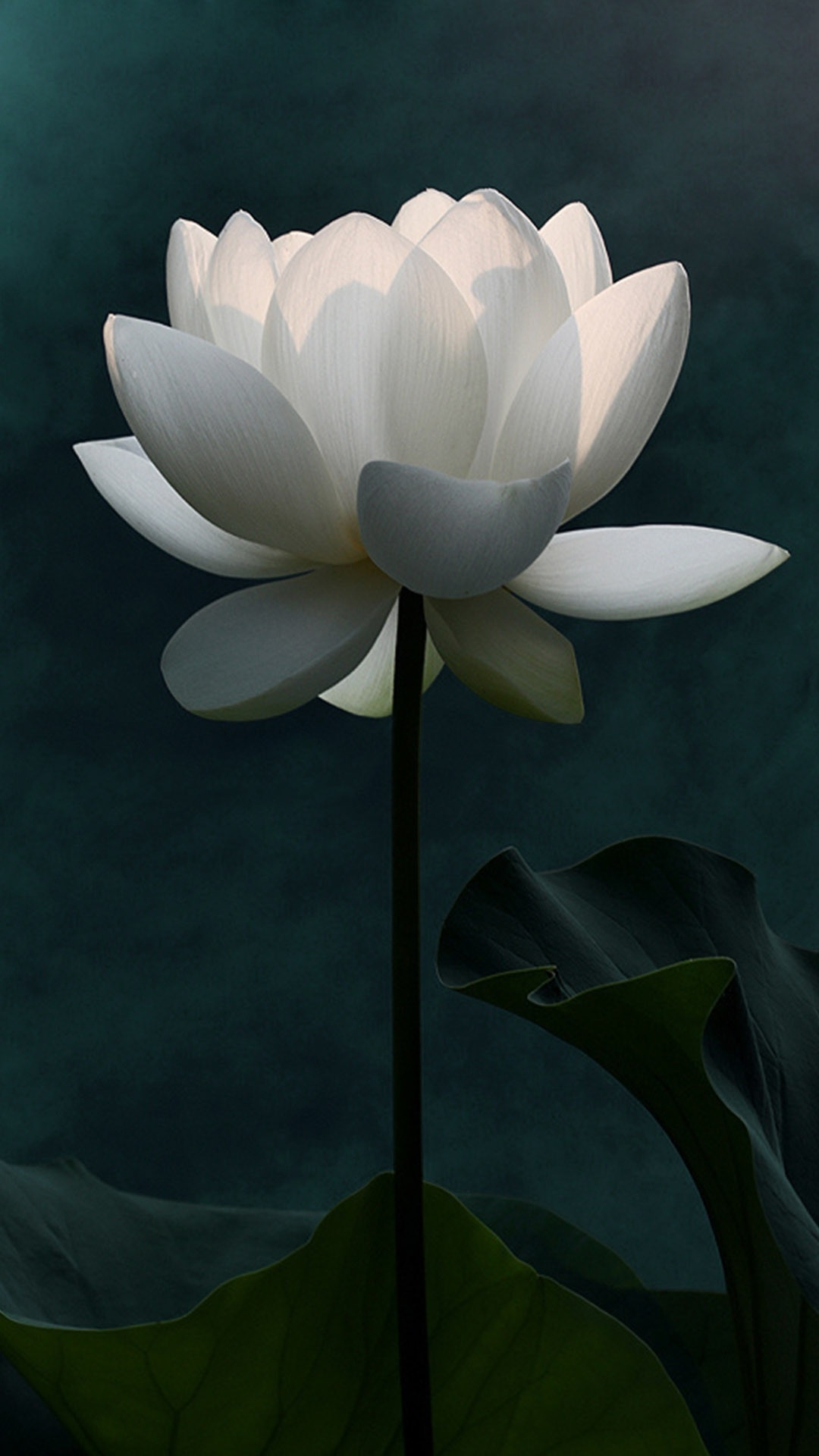你的心,在污泥里开出一朵莲花.