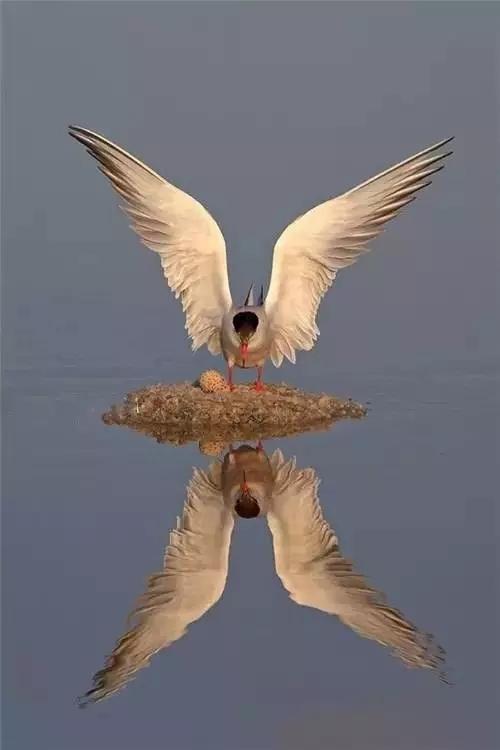 壁纸 动物 鸟 鸟类 500_750 竖版 竖屏 手机
