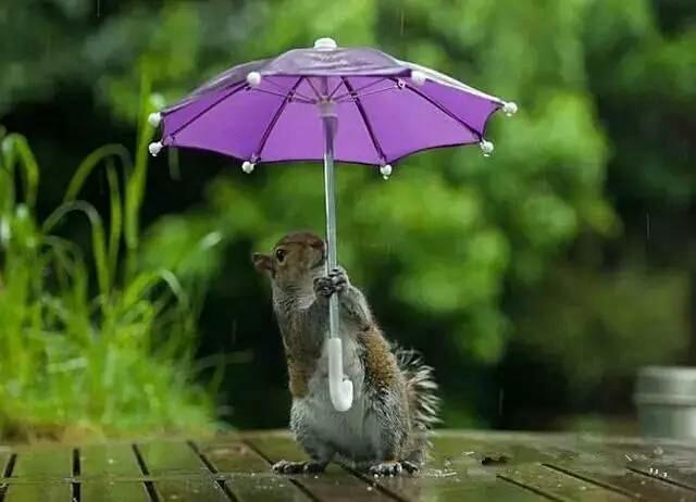 雨中情,太美了!
