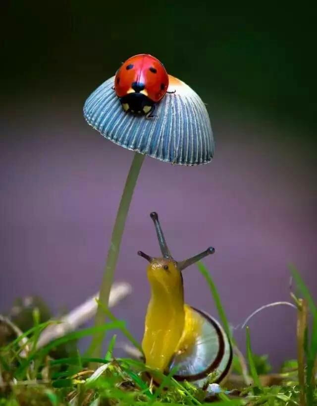 雨中蘑菇手绘图