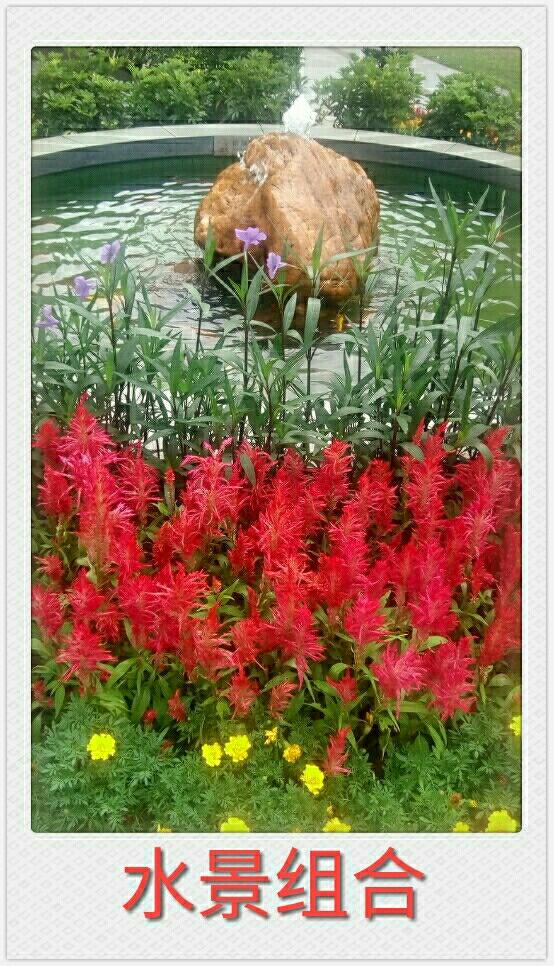 自然生命形式一果翠花艳