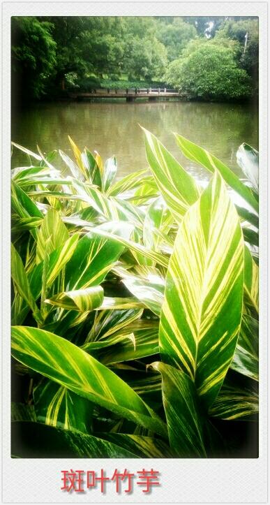 七月庭院花卉一居住生态