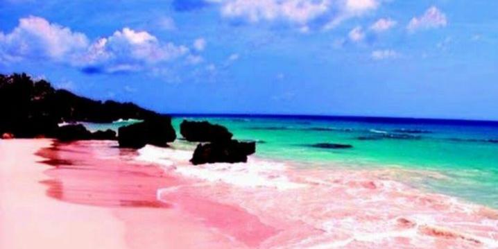 世上唯一的粉色沙滩 最性感的海滩免签了