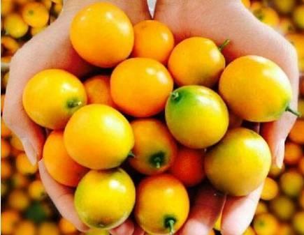 """金橘全身都是宝,是止咳化痰的""""良药"""",小感小冒就靠它了!"""