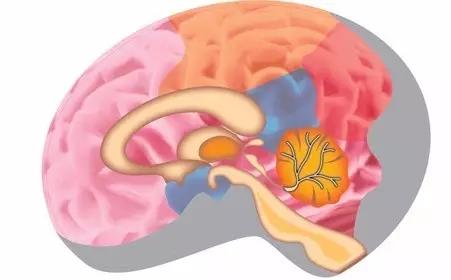 脑不萎缩 80不痴呆 竟然这么简单 为了家人健康 赶紧看看
