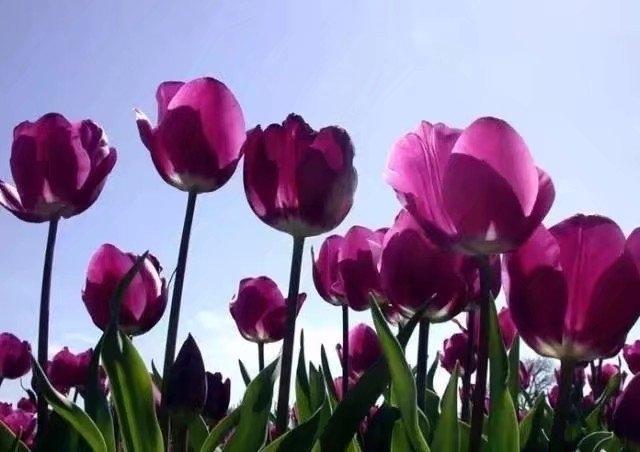 踏青 相约春天 上海植物园