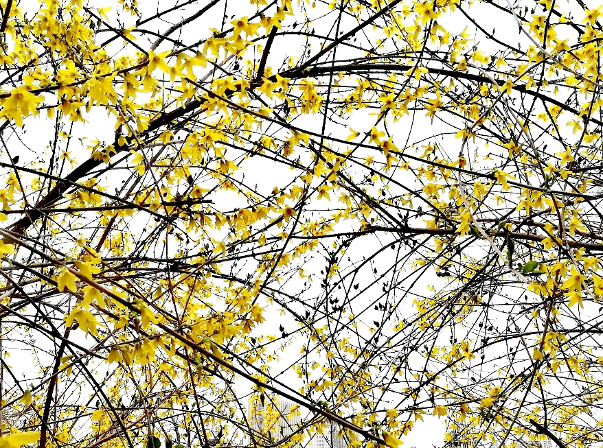 春风•小溪•花开