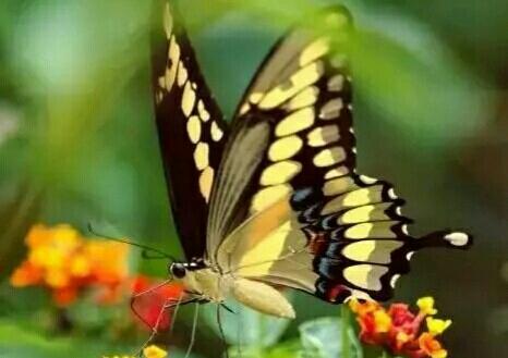 人生如蝶,岁月如花