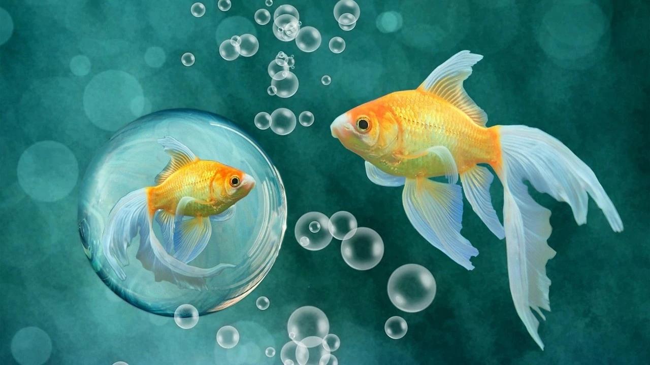 三条鱼的故事 看哭无数人