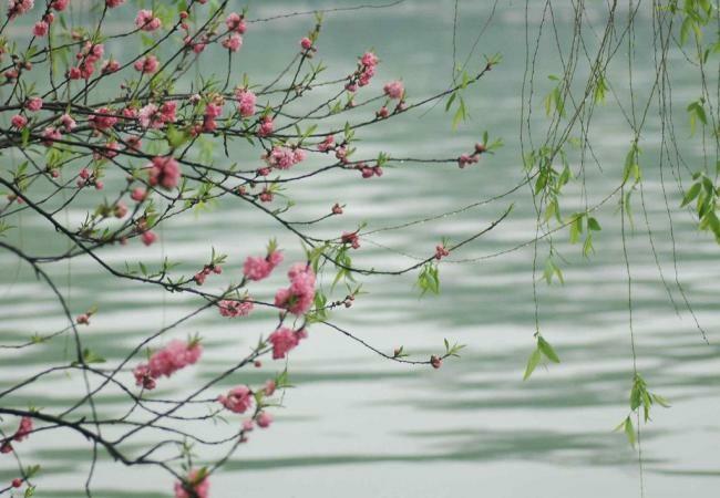 春      归