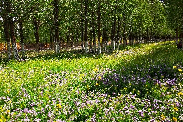 踏青休闲的好去处,济南现代林业示范园