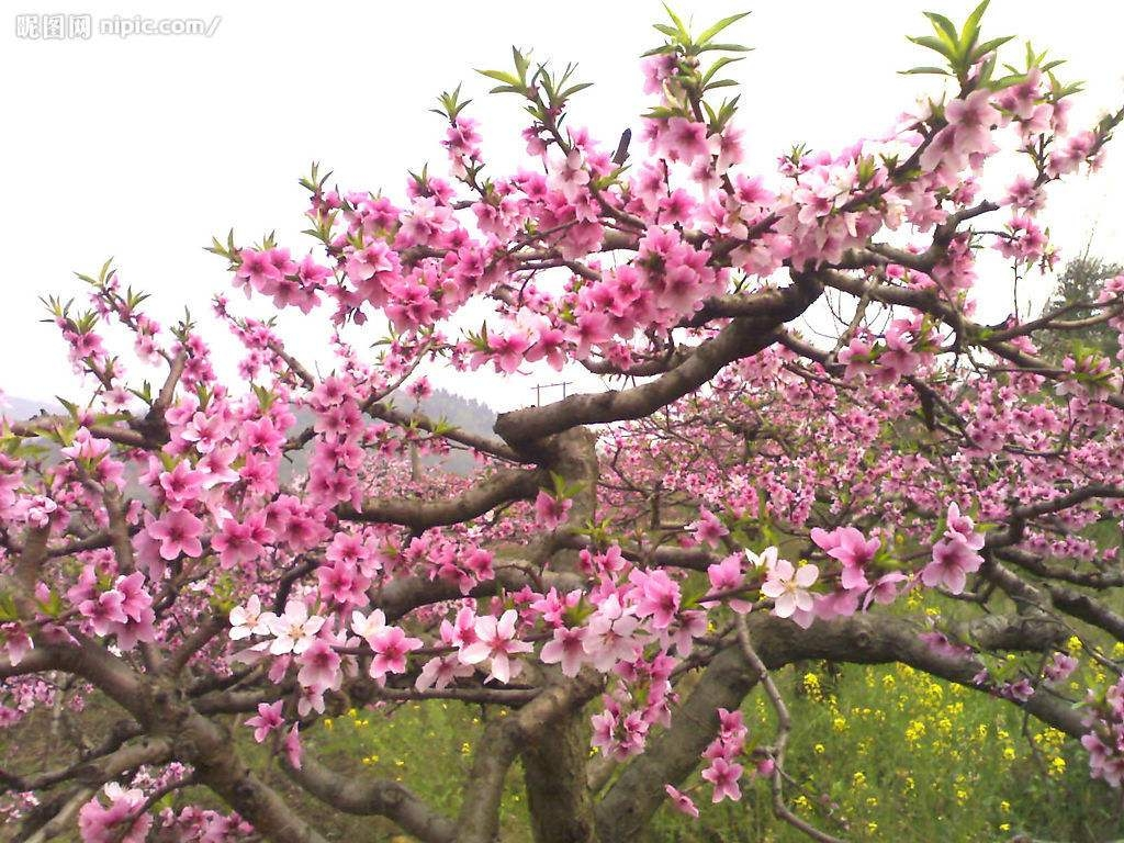 春 暖 花 开      去      踏      青