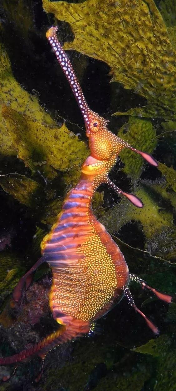 所以這到底是生物還是植物,分辨不出 鯊魚和蝙蝠魚共游,很罕見的圖片
