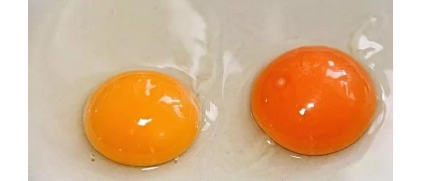 一颗鸡蛋骗了我们20年!今天才知道这样吃软血管、养心神…营养翻倍!