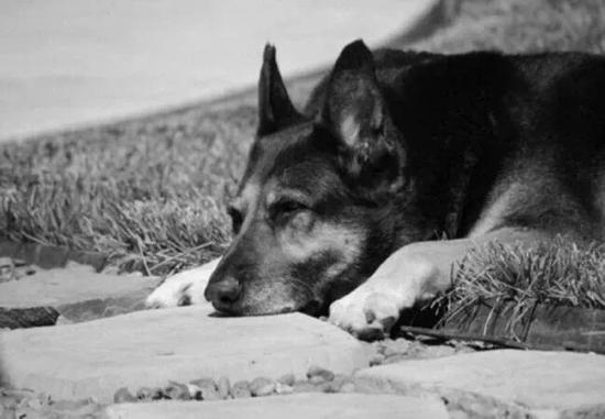 主人去世 爱犬随之消失 11年后真相大白  我愿一生孤独 只为爱你如初