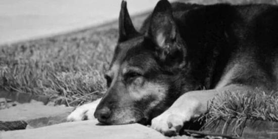 主人去世,爱犬随之消失,11年后真相大白: 我愿一生孤独,只为爱你如初