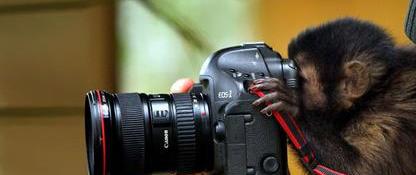 最搞笑的动物摄影师|配上你的图片说明故事居然不一样