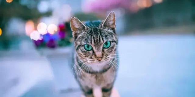 他专注拍猫5年余 猫片超过20000张 公母老少全不放过