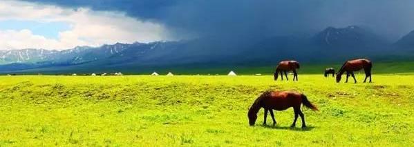 有一种旅行,叫夏天去草原!