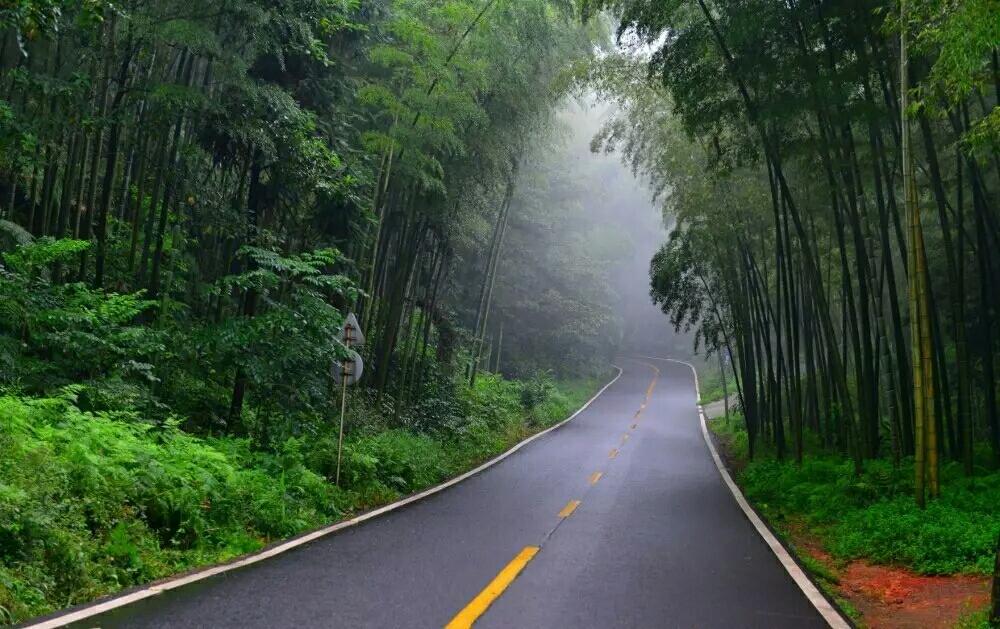 【经典音乐】 听一曲葫芦丝 《竹林深处》 让心静一静