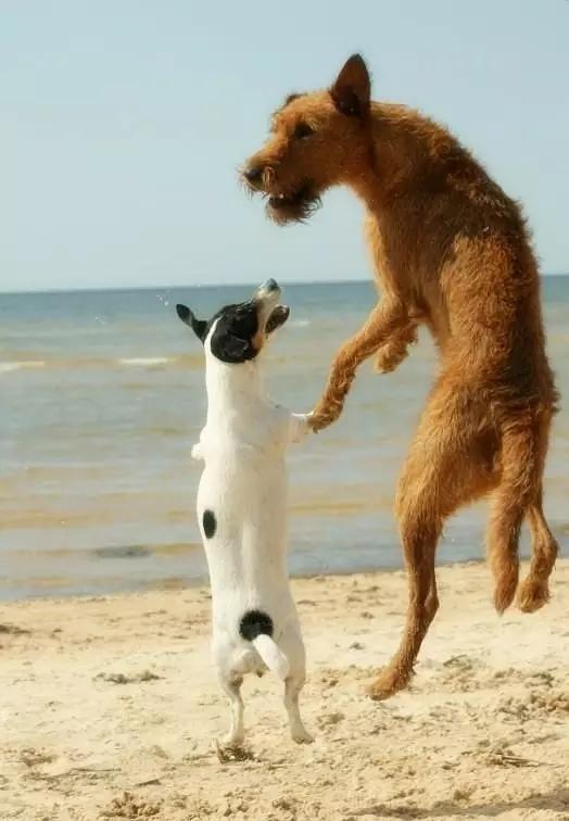 小动物的 爱 情