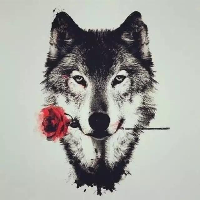 狼的信仰  值得拥有
