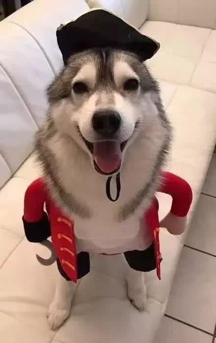 人模狗样,哈哈哈
