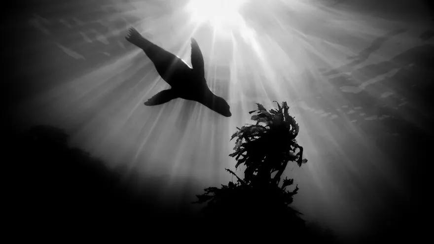 2018年度水下摄影大赛   获奖作品揭晓     每一张  都让人  起鸡皮  疙瘩