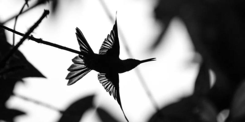 这样的鸟片 我翻来覆去看了好几遍!