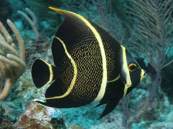 """十一条鱼的故事 颠覆你的""""健康""""认知"""