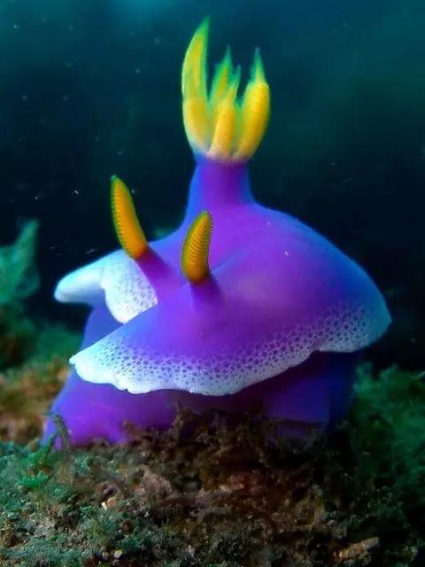 太可爱了  太奇特了,太美丽了,第一次看见这么可爱的海兔,朋友们也
