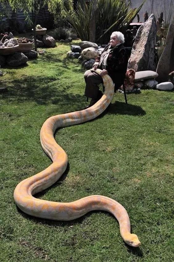 与蛇共舞,太惊人了!