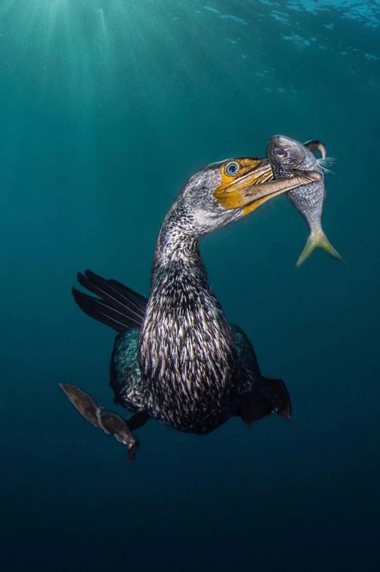 2018年度水下摄影 每一张都震撼人心