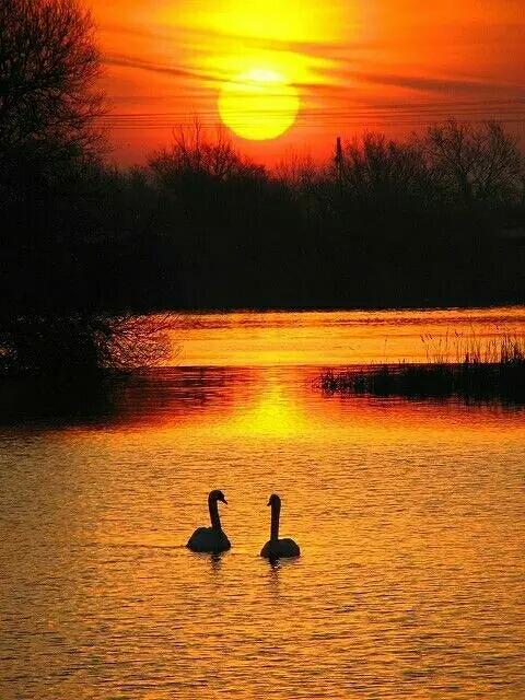 几度夕阳美