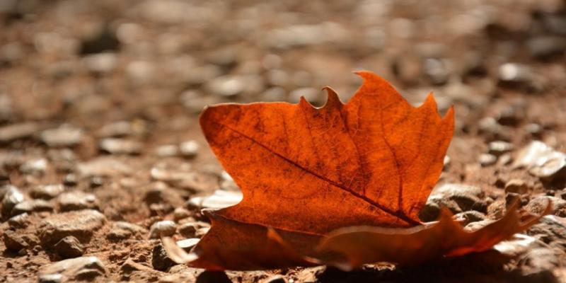 世界著名短篇小说:《最后一片树叶》