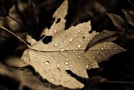 世界著名短篇小说 最后一片树叶