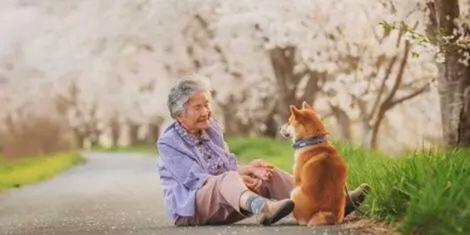 樱花树下85岁奶奶和柴犬一张照片 获12万人点赞