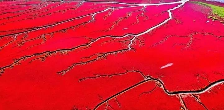 中国最神秘的血色海洋, 一年只红一次!