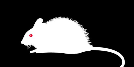 警惕❗️又一例鼠疫被确诊❗️「鼠疫」是怎么一步步杀死一个人的…
