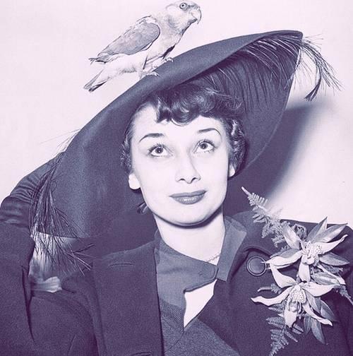 爱戴帽子的美丽的奥黛丽-赫本(黑白照片)