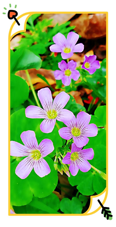 自然生命形式一庭院小花 缤纷多彩丨生气勃勃